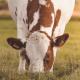 La-AAFCO-y-los-ingredientes-para-nLa-AAFCO-y-los-ingredientes-para-nutrición-animalutrición-animal