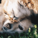 Main-nutrients-in-the-diet-for-dogs-and-cats