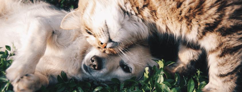 Principales-nutrientes-en-la-dieta-para-perros-y-gatos