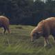 Reglamentación-de-los-antioxidantes-en-nutrición-animal