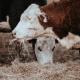 Los-principales-certificados-en-nutrición-animal