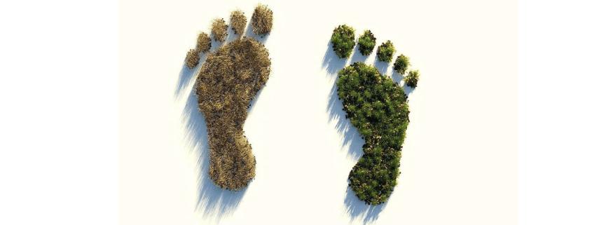 Árboles formando huellas humanas